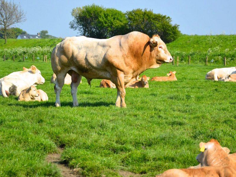 Natuurvlees boerderij van de Poel
