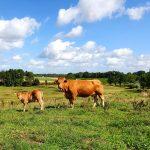 Packbier-Piters Natuurvleesboerderij 2