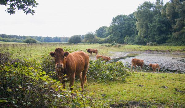 Natuurvlees-Nederland Slagerijen Kaldenberg