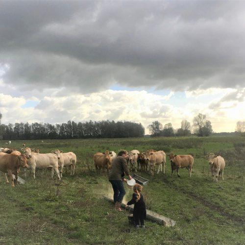 Natuurvlees boerderij MTS Knuiman