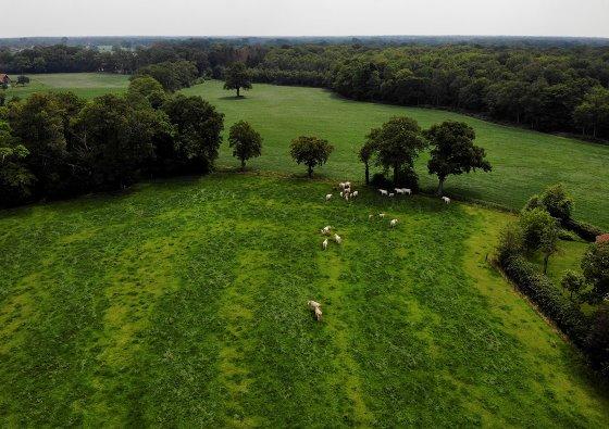 Natuurvleesboerderij Harink