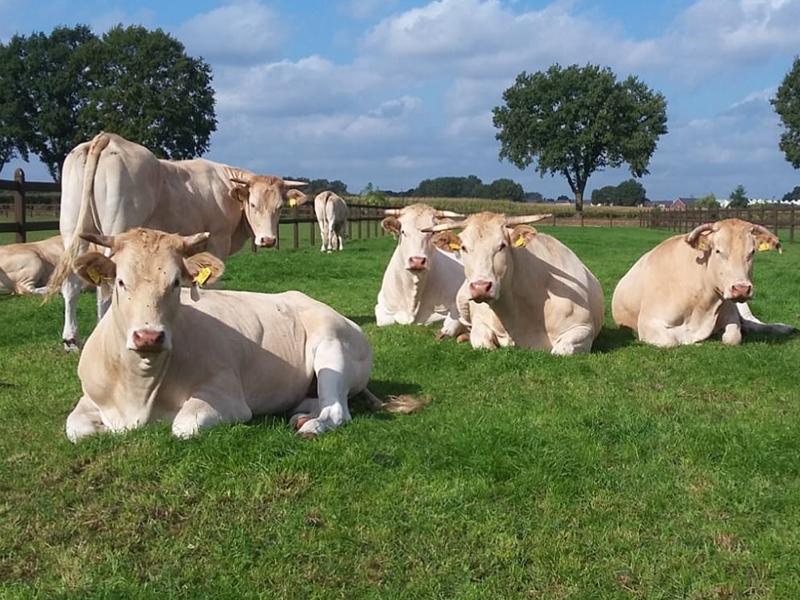 Natuurvleesboerderij Wijlaars